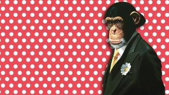 FlaMonkey, el flamenco más mono en Monkey Week 2015